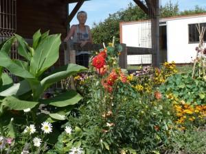 036b 300x225 Fleurs et plantes aromatiques