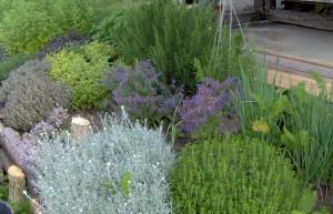 HPIM0877b 300x193 Fleurs et plantes aromatiques