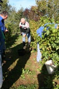IMG 3765b 200x300 Le Saint Pierre Doré et la vigne