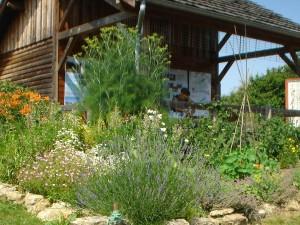 le Verger du Vernet 2013 030b 300x225 Fleurs et plantes aromatiques