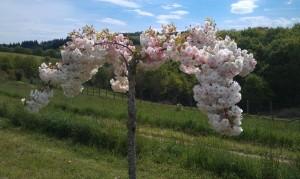 IMAG1680 2 300x179 Fleurs et plantes aromatiques