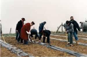 Plantation vigne 1998b 300x196 Le Saint Pierre Doré et la vigne