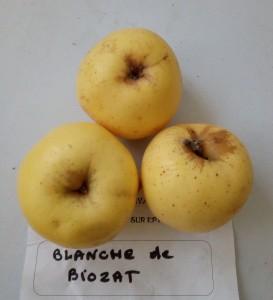 Blanche de Biozat 273x300 Variétés locales