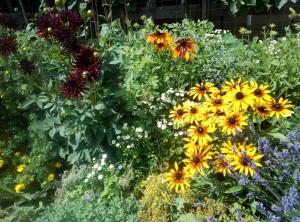 IMG 20170715 121910 2 300x222 Fleurs et plantes aromatiques