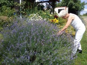IMG 20170715 121936 2 300x225 Fleurs et plantes aromatiques